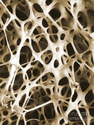 استخوان انسان