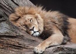نحوه خوابیدن حیوانات مختلف چطوری است؟