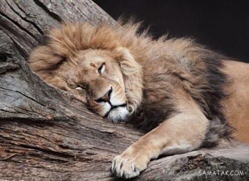 حیوانات چگونه می خوابند
