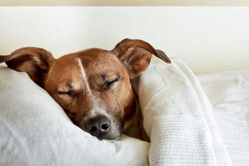 خواب دیدن سگ ها