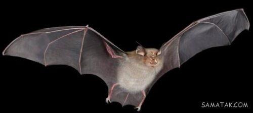 دلیل برعکس خوابیدن خفاش