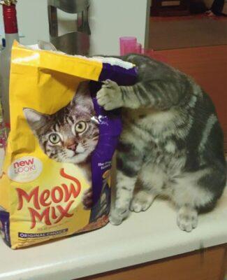 عکس به موقع گربه