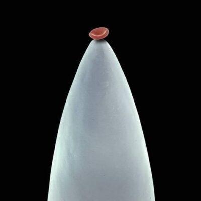 گلبول قرمز روی سوزن