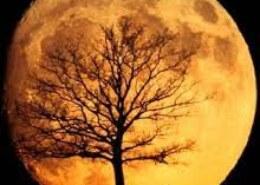 چرا بعضی وقت ها ماه بزرگتر به نظر میرسه؟