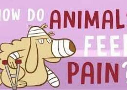 حیوانات چطور درد را احساس می کنند؟